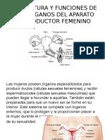 Anatomia Del Aparato Reproductor