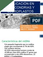 Exposicion sobre Replicacion de Mitocondria y Cloroplasto