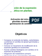 regulacic3b3n-glioxilato