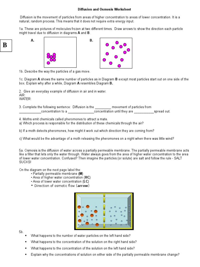 Diffusion and Osmosis Worksheet 1 Osmosis – Osmosis Worksheet