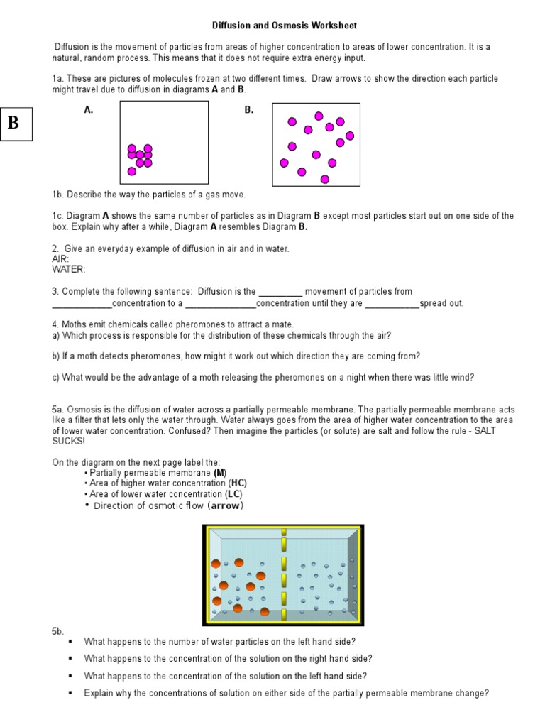 Diffusion and Osmosis Worksheet 1 | Osmosis | Chemistry