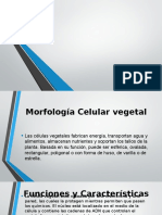 Mor Fo Log i a Celular Vegetal