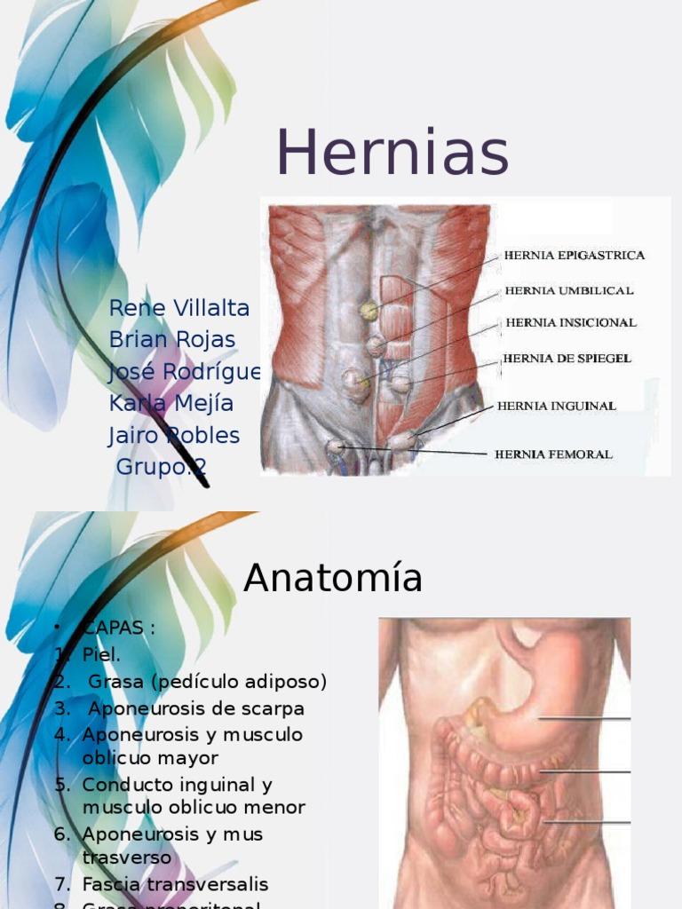 Magnífico Anatomía De La Hernia Inguinal Cresta - Anatomía de Las ...