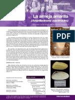 Mesodesma mactroides