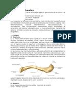 Anatomia Hombro