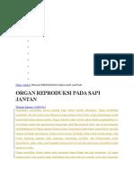 Organ Reproduksi Jantan