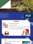 ANÁLISE DO CRESCIMENTO DE FUNGOS UTILIZANDO DOIS BIOCIDAS TEREBINTINA E NANOPARTÍCULAS DE PRATA (certo).pdf