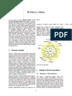 Krebsov ciklus
