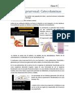 Fisiología Endocrina CLASE 8