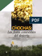 Chochas Las Flores Comestibles Del Desierto Tamaulipas