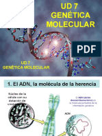 geneticamolecular1parteadnreplicacintranscripcinytraduccin-120330063336-phpapp02