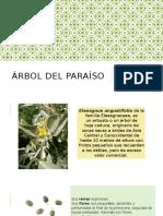 árbol del paraiso- jardinería.pptx