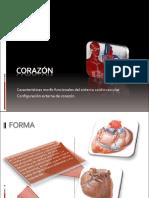 1-corazon-externo (1).pdf