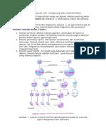 meiosis bedil.docx