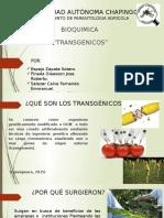 BIOQ SEMINARIO TRANSGENICOS