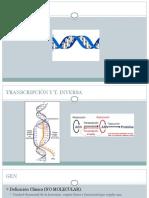 TRANSCRIPCIOn-1.pptx