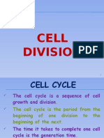 Cell Cycle (Cell Division)
