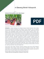 Cara Menanam Bawang Merah Hidroponik Sistem Wick