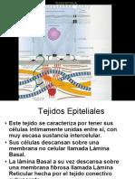 Tejido Epitelial resumen