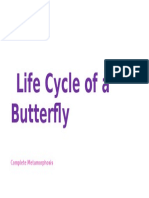 Life Cycle of a Butterfly (ECE Demo)