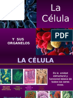 Celulas y Organelos