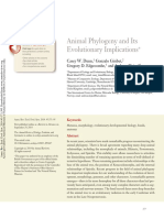 filogenia animal.pdf