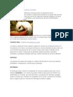El Sistema Digestivo de Los Conejos (Alfre_may)
