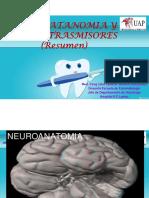 NEUROANATOMIA Y NEUROTRASMISORES.pdf