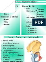 a_Osteologia.ppt.pptx