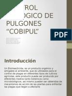Control Biologico de Pulgones