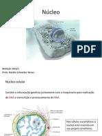 2 - Organelas e Núcleo Interfásico