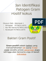 Bakteri Patogen Gram Positif Kokus