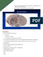 DOENÇA DE PEYRONIE.docx