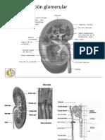 9 filtración glomerular