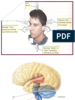 4  higher level structures  phantom limb   split-brain  ppt