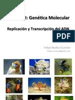 Clase_Replicacion_y_Transcripcion_.pdf