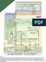 Sistemática y Filogenia-Strasburger (2013)