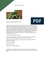 Relatório de Aulas Práticas Farmacognosia