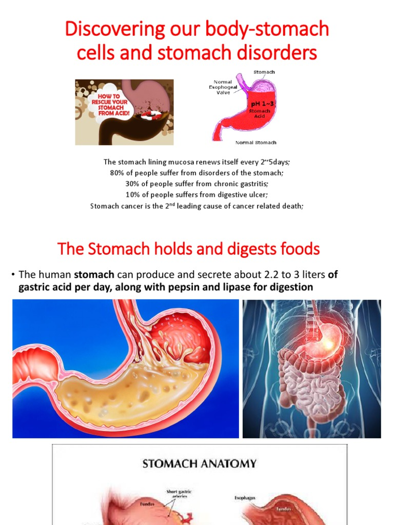 Stomach Cells And Stomach Diseases Stomach Digestion