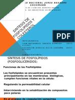 Sintesis de Fosfolipidos y Colesterol - Bioquimica