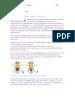 Mosco Drosophila Alondra