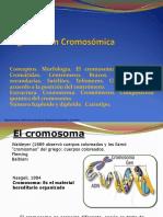 1246399932.Organizacion Cromosomica 2016