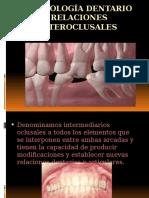 Morfología dental