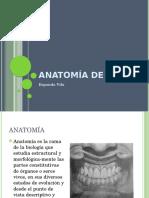 Anatomía-Dental.pptx
