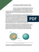 Micovirus Aspergillus Foetidus