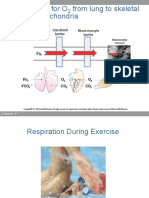 Respiration during exercise hk468.pdf