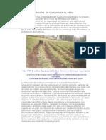 Rotación de Cultivos en El Peru