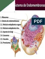 RibosomasSistemaEndomembranasModificado