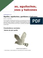 Águilas, Aguiluchos, Gavilanes y Halcones- Luis Alberto Bressan