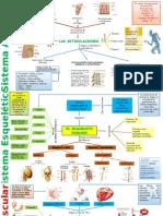 Aparatos y Sistemas Del Cuerpo Humano Mapas Mentales